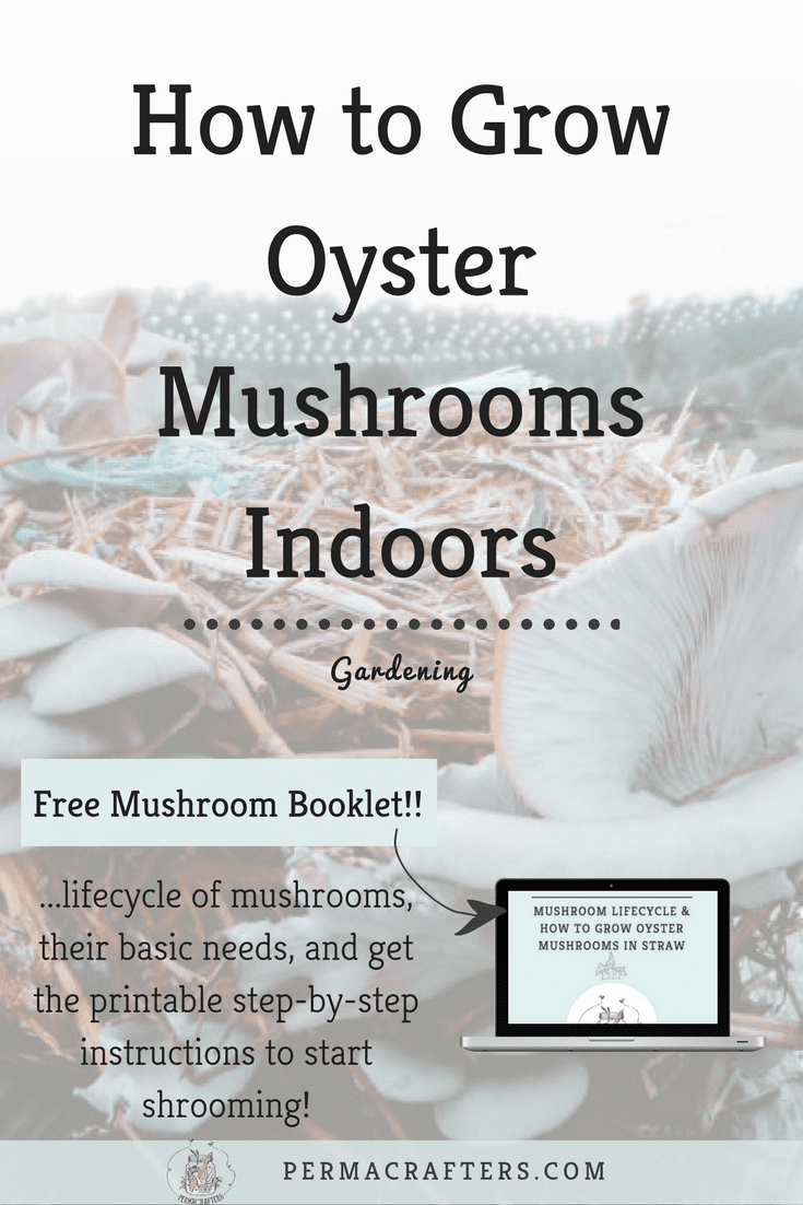How to Grow Oyster Mushrooms Indoors - Permacrafters